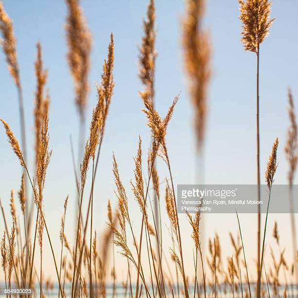 plants on beach - vanessa van ryzin stockfoto's en -beelden