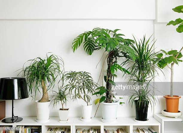 Plants on bookcase in the room
