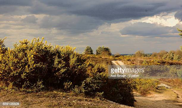 Plants On Countryside Landscape Against Clouds