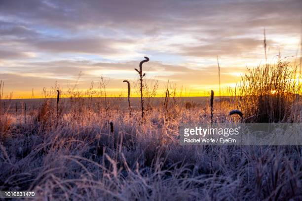 plants on field against sky during sunset - rachel wolfe stock pictures, royalty-free photos & images