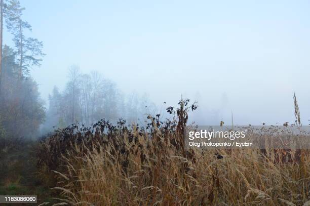 plants on field against sky - oleg prokopenko stock pictures, royalty-free photos & images