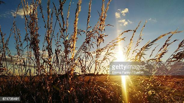 Plants On Field During Sunset