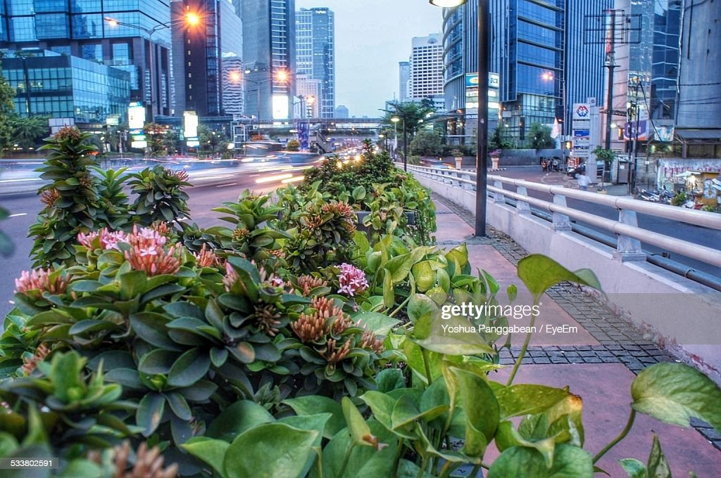 Plants On Sidewalk In City : Foto stock