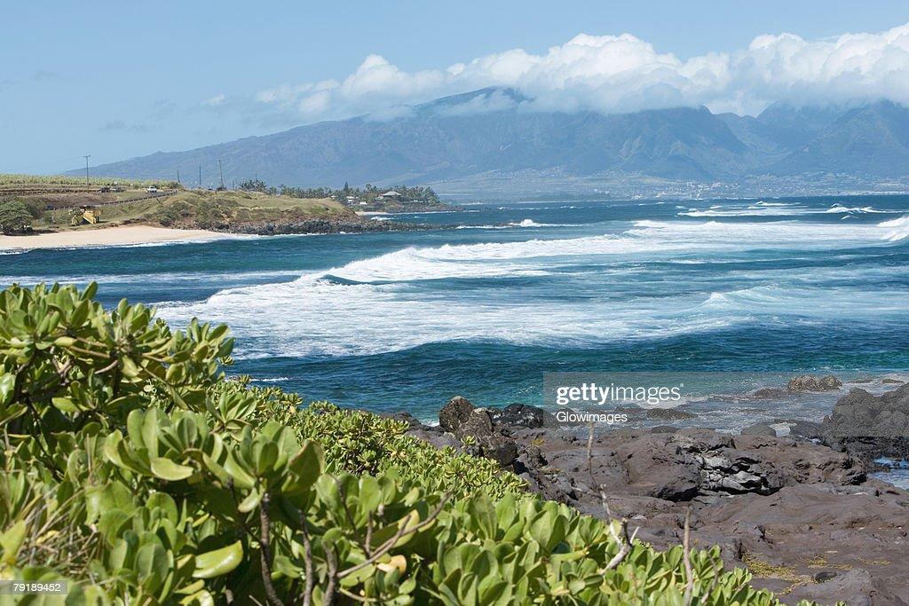 Plants on the coast, Hookipa Beach Park, Maui, Hawaii Islands, USA : Foto de stock