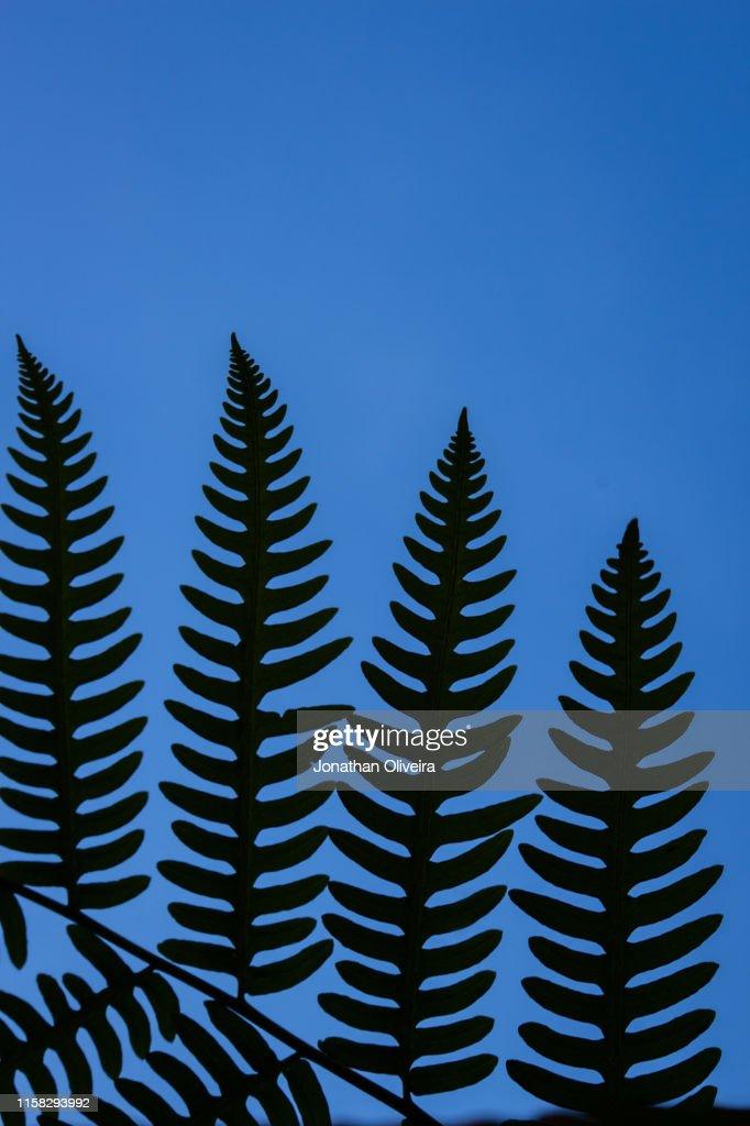 Plants : Stock Photo