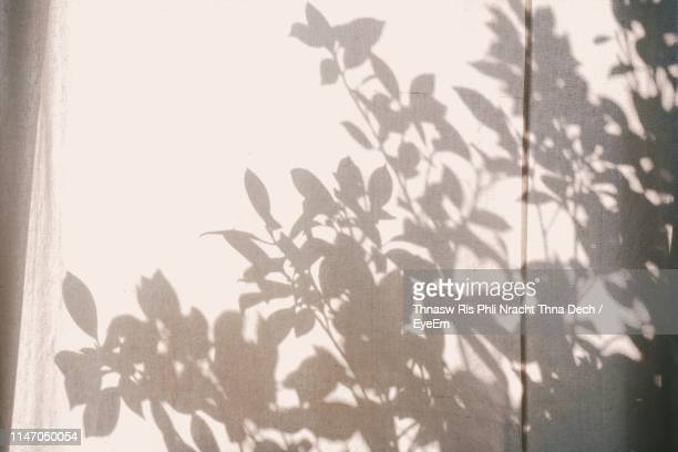 plants seen through curtain - schaduw stockfoto's en -beelden