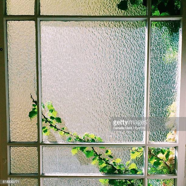 plants seen through frosted glass window - danielle reid stock pictures, royalty-free photos & images