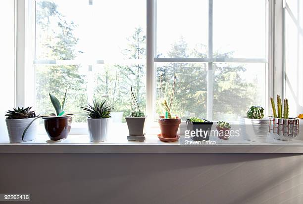 plants sitting on window sill - window sill stock pictures, royalty-free photos & images