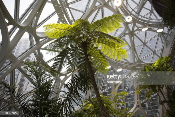 Plants stand inside the Amazoncom Inc Spheres in Seattle Washington US on Tuesday Jan 23 2018 The online retailer is scheduled to unveil the spheres...