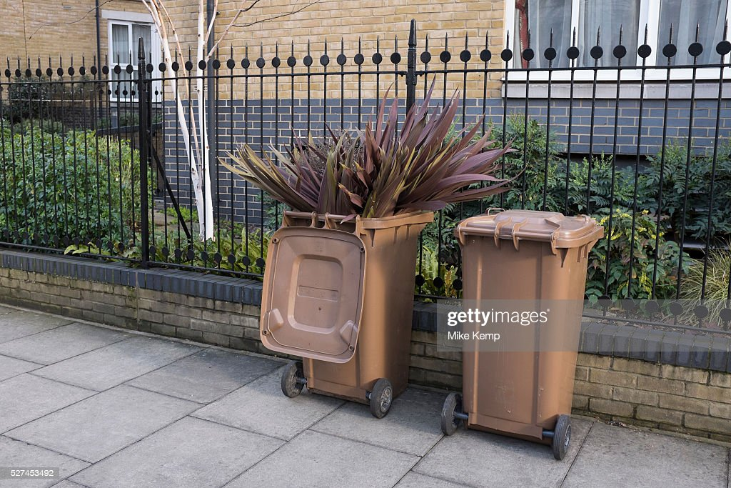 UK - London - Plants sticking out of a wheelie bin after being thrown away : News Photo
