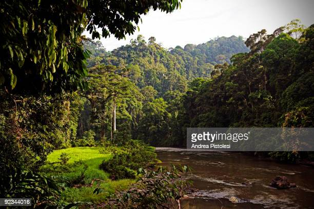 Plants that thrive in the primary rainforest of Danum Valley Park, in the state of Sabah, Borneo island, Malaysia.