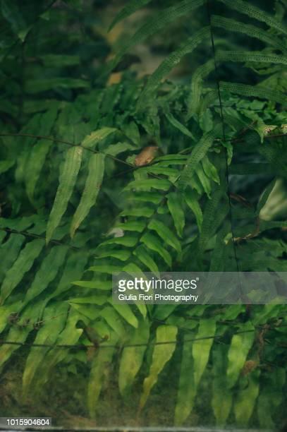 plants through a glass - quinta da regaleira photos stock pictures, royalty-free photos & images