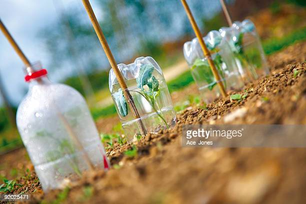 Plants under cloches