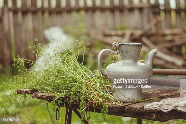 Plants With Kettle On Table In Yard