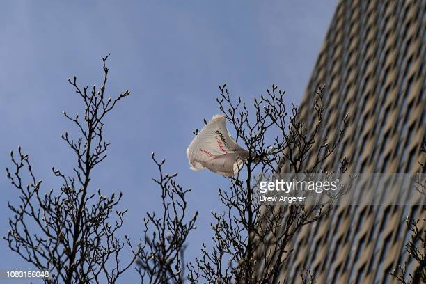 A plastic bag hangs in a tree in Lower Manhattan January 15 2019 in New York City New York Governor Andrew Cuomo is planning to push for a statewide...