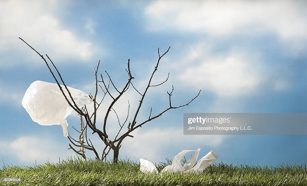 Plastic bag on tree brach : Stockfoto