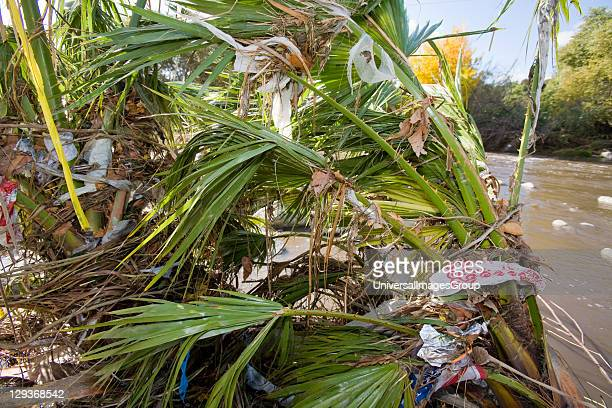 Plastic bags and other trash get caught and accumulate in trees and shrubs along the Los Angeles River at the Glendale Narrows. Urban runoff carries...