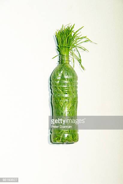 Plastic bottle filled with Wheat Grass.