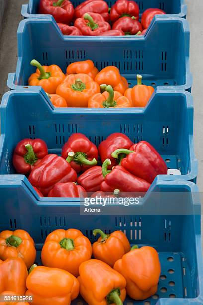 Plastic crates with orange and red bell peppers / sweet pepper