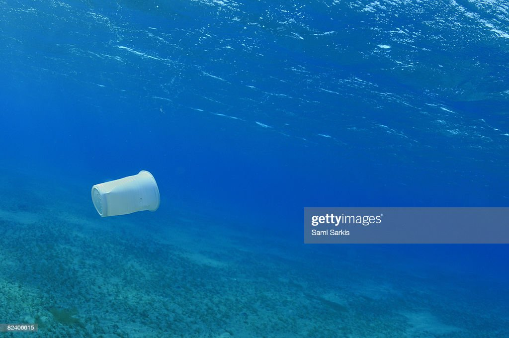 Plastic cup in the sea, Red Sea, Egypt : Stock Photo