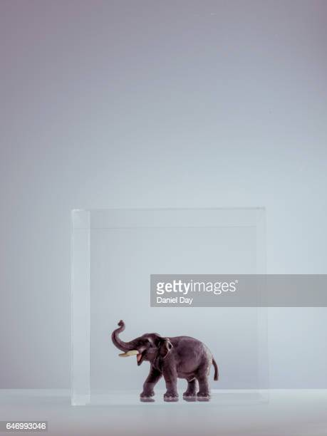 Plastic elephant in a perspex cube