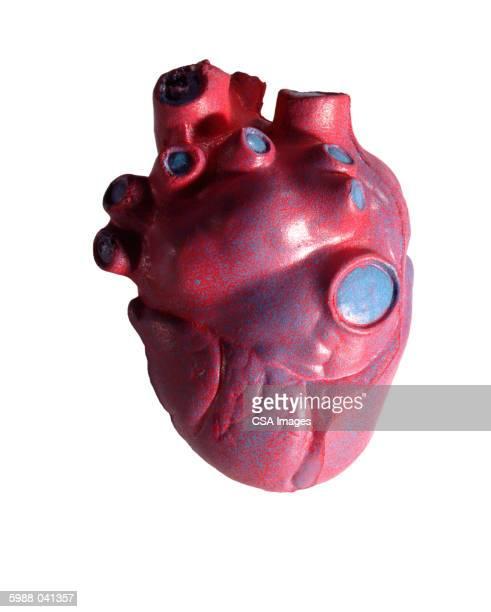 Plastic Human Heart