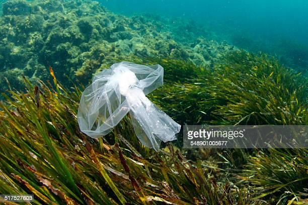 Plastic is dangerous at sea