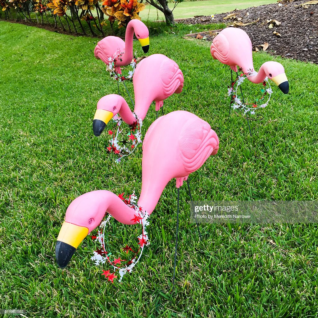 Plastic Lawn Flamingos Decorated For Christmas Stock Photo   Getty ...