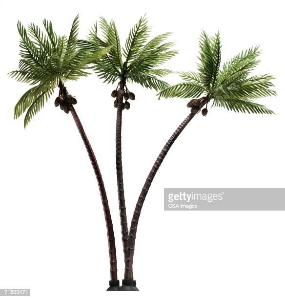 plastic palm trees - coconut palm tree stock pictures, royalty-free photos & images