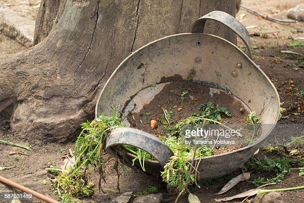 plastic plate for feeding cattle - plastic plate stock pictures, royalty-free photos & images