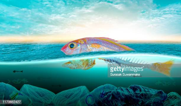plastic pollution in marine environmental problems animals in the sea cannot live. and cause plastic pollution in the ocean (environmental concept) - water pollution stock pictures, royalty-free photos & images