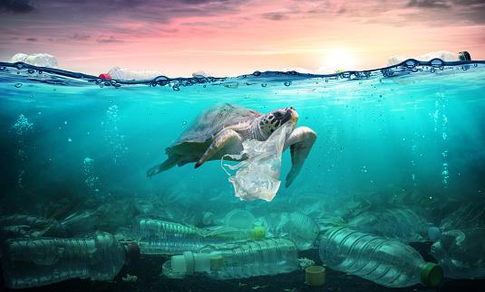 Plastic Pollution In Ocean - Turtle Eat Plastic Bag - Environmental Problem 1131217734