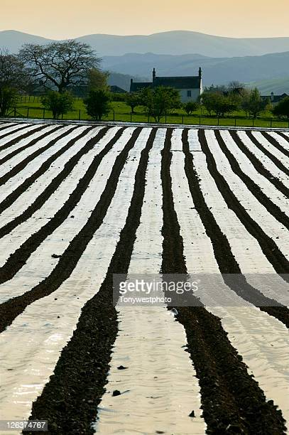 Plastic sheeting used to enhance crop germination on a farm near Penrith in Cumbria