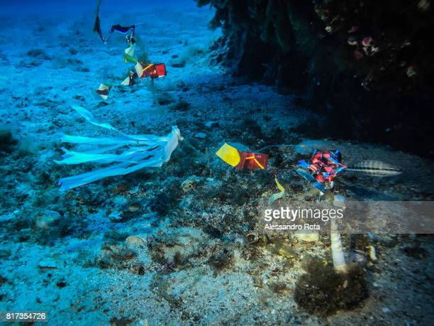 plastic trash is seen during a rock bottom dive site 33 meters below the sea level on July 6 2017 inside the Egadi Arcipelago Natural reserve