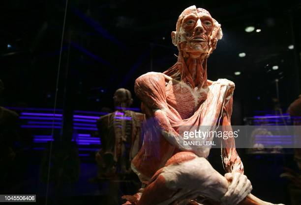 A plastinated body called the ponderer is on show at the opening of the Body Worlds museum in London on October 4 2018