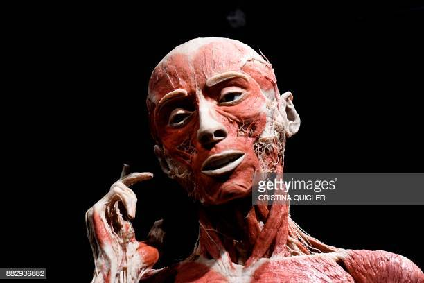 A plastinated body of a person is on display at the 'Casino de la Exposicion' cultural center in Seville on November 30 on the eve of the opening of...