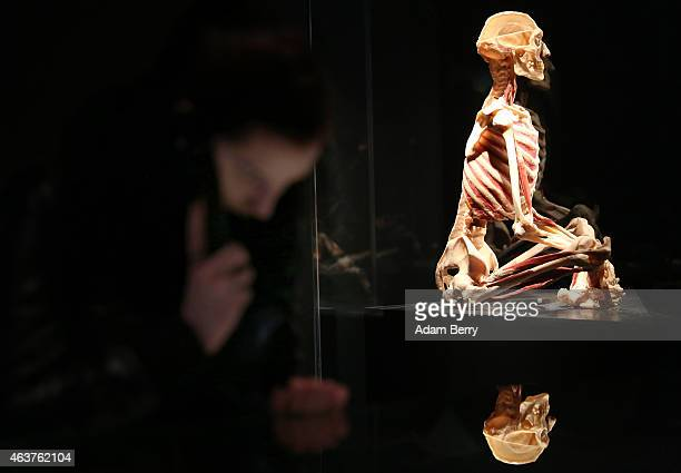 A plastinated corpse is seen on display as a visitor uses an audio guide on the opening day of the Bodyworlds exhibition in the Menschen Museum on...