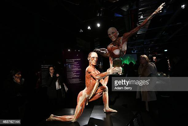 Plastinated corpses look into a mirror on the opening day of the Bodyworlds exhibition in the Menschen Museum on February 18 2015 in Berlin Germany...