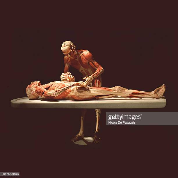 CONTENT] Plastinated human bodies on display at 'Body Worlds' the anatomical exhibition of real human bodies by German anatomist Gunther von Hagens...