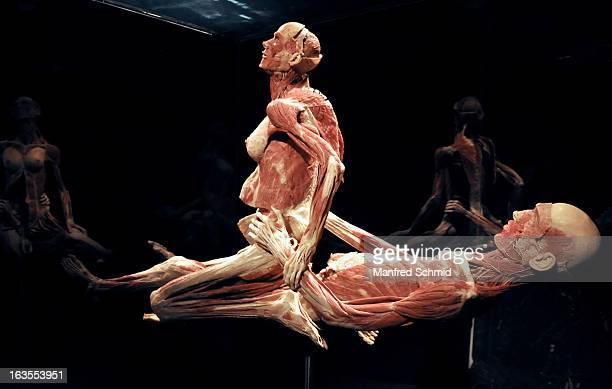 A plastinated human body is on display during a press conference for 'Koerperwelten und der Zyklus des Lebens' exhibition by German anatomist Gunther...