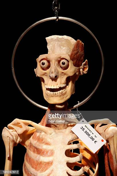 Plastinated human body, marked with a red dot to indicate that only institutions may buy it, hangs for sale for EUR 35,500 at the shop of the...