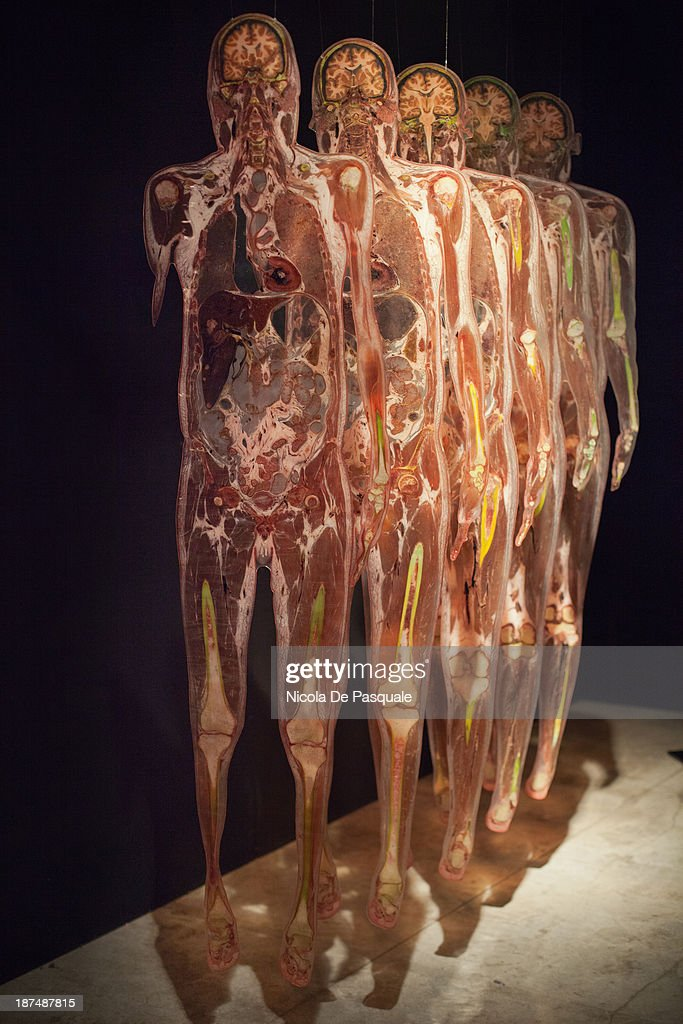 Content Plastinated Human Body On Display At Body Worlds The News Photo Getty Images