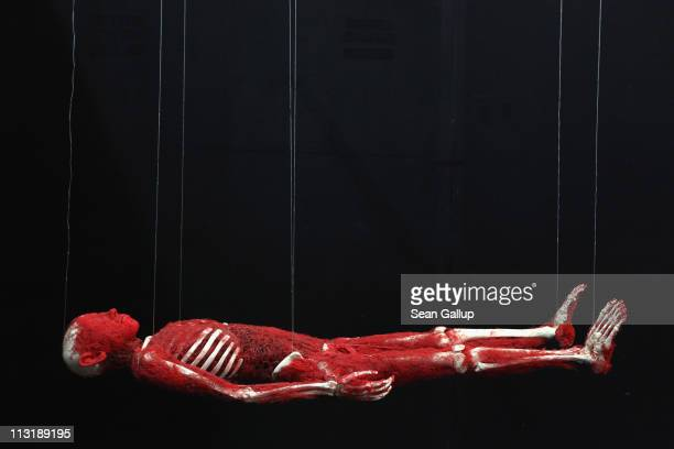 Plastinated human corpse revealing only its bones and arteries hangs from nylon twine at the Body Worlds exhibition on April 26, 2011 in Berlin,...