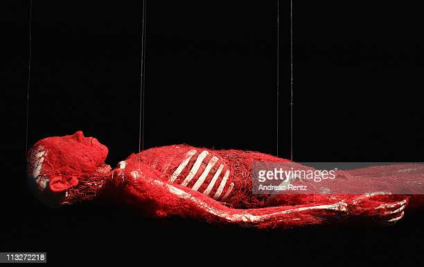 A plastinated human corpse revealing only its bones and arteries hangs from nylon twine at the Body Worlds exhibition on April 29 2011 in Berlin...