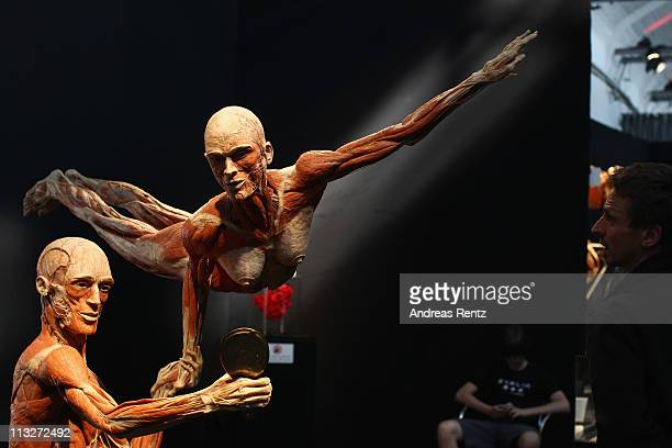 Plastinated human corpses are pictured at the Body Worlds exhibition on April 29 2011 in Berlin Germany The exhibition which features human and...