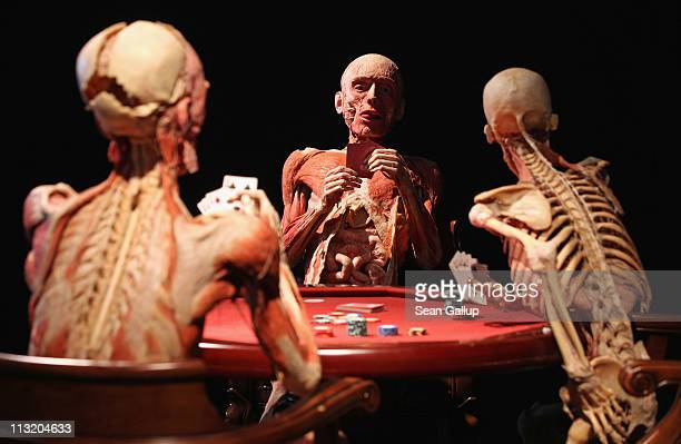 Plastinated human corpses posed to look like poker players stand on display at the Body Worlds exhibition on April 27, 2011 in Berlin, Germany. The...