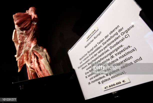 Plastinated human, female torso, which may only be purchased by institutions, stands for sale for EUR 47,600.00 at the shop of the Plastinarium on...