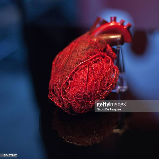 CONTENT] Plastinated human heart on display at 'Body Worlds' the anatomical exhibition of real human bodies by German anatomist Gunther von Hagens in...