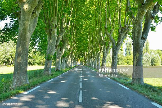 platanen avenue - alpes de haute provence stock photos and pictures