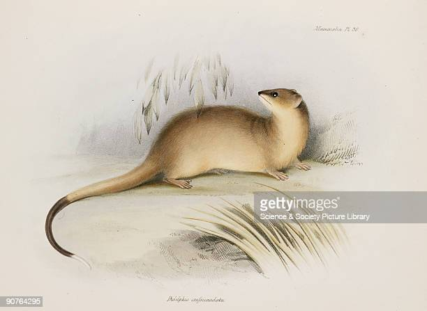 Plate from 'The Zoology of the Voyage of HMS Beagle' published in London 18391843 and edited by the British originator of evolutionary theory Charles...